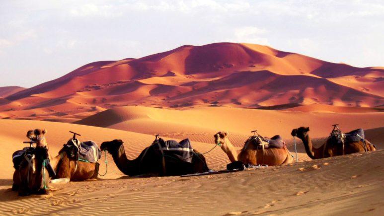 Катаемся по пустыне на верблюдах