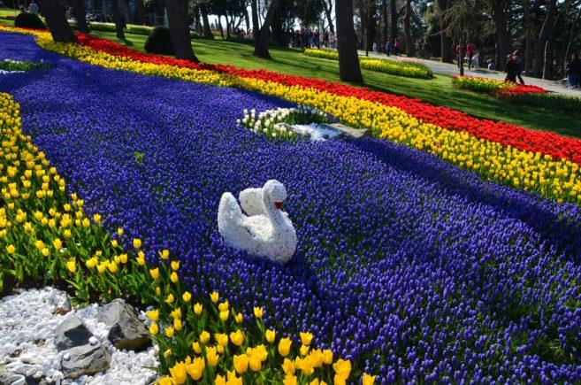 Turkey_Istanbul_park_flowers_3