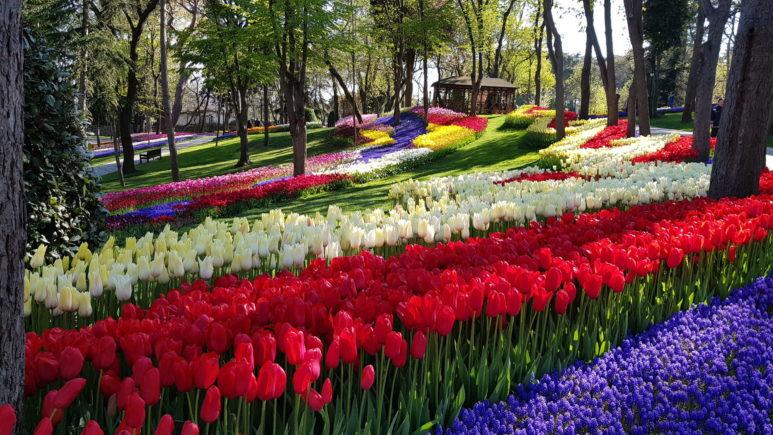 Turkey_Istanbul_park_flowers