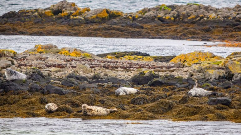 Iceland-Illugastadir-seal-watching (2)