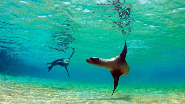 Плаваем с морскими львами на Исабела