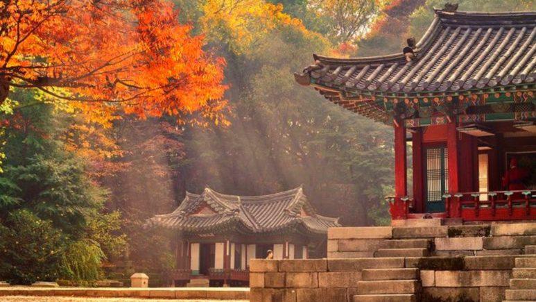 Очарование осени в садах и парках