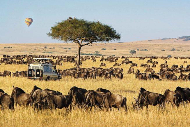 Смотрим самое зрелищное шоу дикой природы в парке Маасаи Мара
