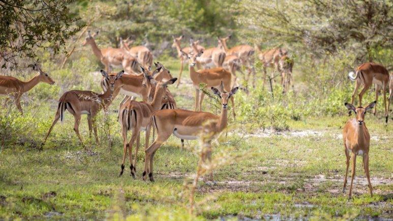 Сафари в Заповеднике Селус (южная Танзания)