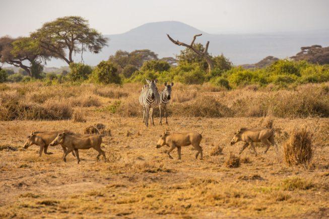Любуемся видами Килиманджаро по время сафари в парке Амбосели