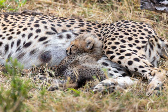 Ловим животных в объектив в парке Маасаи Мара